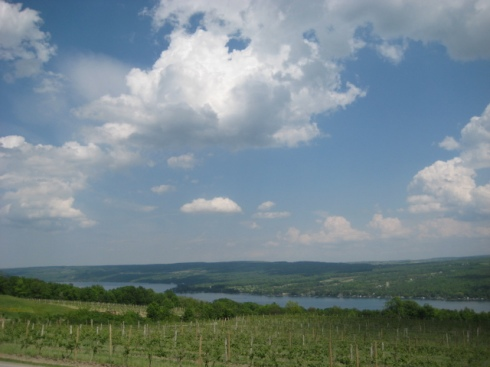 Vineyards at Dr. Frank's Vinifera Wine Cellars, Keuka Lake